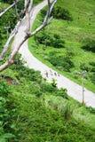 Siedem kózek chodzą na drodze w górze w Lanyu, Tajwan Obrazy Stock