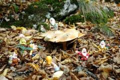 Siedem Przyćmiewają w lesie obrazy royalty free