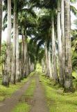 Siedlisko Łagodny w Martinique Zdjęcia Royalty Free