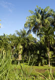 Siedlisko Łagodny w Martinique Fotografia Stock