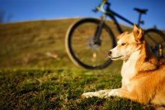 Siedzącej czerwieni psi i halny bicykl z greenfield tłem obraz royalty free