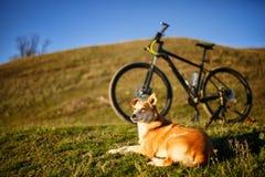 Siedzącej czerwieni psi i halny bicykl z greenfield tłem zdjęcie royalty free