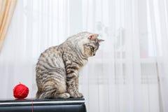 siedzący kot siedzi obrazy royalty free