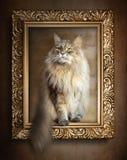 Siedzący kot w złoto ramie Zdjęcie Royalty Free