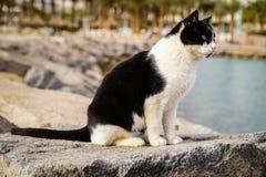 siedzący kota dopatrywanie obrazy stock