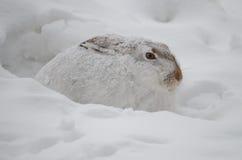Siedzący out opad śniegu Fotografia Royalty Free