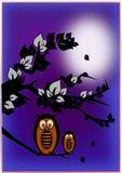 siedzący sowy drzewo Obraz Royalty Free