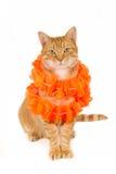 Siedzący imbirowy kot z boa Obrazy Royalty Free