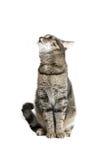 Siedzący Kot Zdjęcie Stock