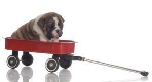 siedzący szczeniaka furgon Obrazy Royalty Free
