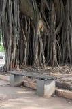 Siedzenie w kwadracie z ogromnym antycznym drzewem behind zdjęcie royalty free