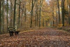 Siedzi i chodzi w jesiennym drewnie, Baden Zdjęcia Royalty Free