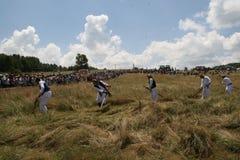 Siega de la hierba en prado de la montaña Fotografía de archivo
