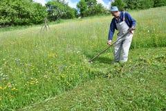 Siega de la manera tradicional de la hierba con la guadaña Fotografía de archivo