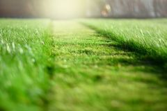 Siega del césped Una perspectiva de la tira del corte de la hierba verde Selecti imagenes de archivo