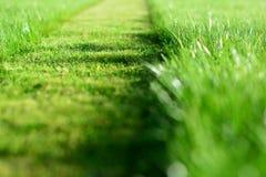 Siega del césped Una perspectiva de la tira del corte de la hierba verde Selecti fotos de archivo libres de regalías