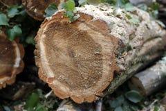 Siekać drewniane bele Fotografia Royalty Free