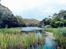 Siekać rzeki @ Królewskiego parka narodowego, Sydney fotografia royalty free