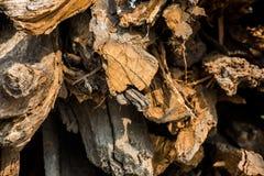 Siekać bele drewno Zdjęcie Stock