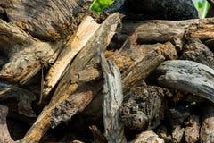 Siekać bele drewno Obraz Stock