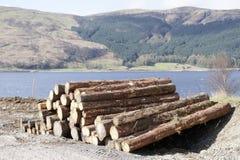Siekaj?ca drewniana beli sterta dla po?arniczego miejsca na lasowych lasach w domu zielenieje biomass energi? fotografia royalty free