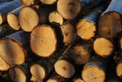 siekający ogienia stosu drewno Obraz Royalty Free
