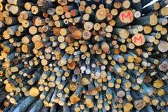 siekający ogienia stosu drewno Zdjęcia Royalty Free