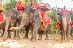 SIEM OOGST, 24 Kambodja-Februari, 2015: Niet geïdentificeerde cambodian in nationaal Royalty-vrije Stock Foto