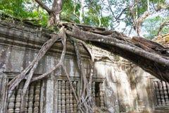 Siem Przeprowadza żniwa, Kambodża, Dec - 03 2016: Beng Mealea sławny Histori Obrazy Royalty Free