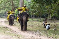 Siem Przeprowadza żniwa, Kambodża - 26 Marzec 2018: Słoń z jeźdzem w ranku parku w Angkor Wat świątyni zdjęcie royalty free