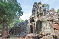 Siem Reap, Камбоджа - 11-ое декабря 2016: Сом животиков в Angkor известная высокая Стоковая Фотография
