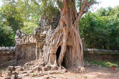 Siem Reap, Камбоджа - 11-ое декабря 2016: Сом животиков в Angkor известная высокая Стоковое Изображение