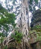Siem Reap Fotografia de Stock Royalty Free