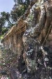 Siem Reap Angkor Wat Preah Khan ist ein Tempel bei Angkor, Kambodscha, im 12. Jahrhundert für König Jayavarman VII errichtet Lizenzfreie Stockfotografie