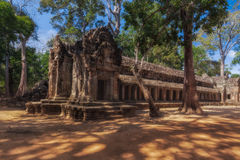 SIEM REAP, CAMBODIA. Ancient Khmer architecture. Ta Prohm temple with giant banyan tree at Angkor Wat complex. Royalty Free Stock Image