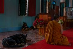 Buddhist monk singing mantras with dogs. SIEM REAP, CAMBODIA - DECEMBER 19, 2018: Monks with dogs sitting in the buddhist temple stock images
