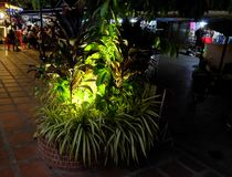 Outdoor flower bed with tropical plants, ornamental plants illuminated by street lights. Siem Reap, Cambodia, December 11/2018 outdoor flower bed with tropical royalty free stock photography