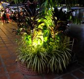 Outdoor flower bed with tropical plants, ornamental plants illuminated by street lights. Siem Reap, Cambodia, December 11/2018 outdoor flower bed with tropical stock photo