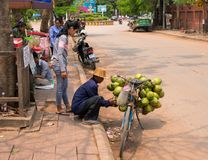 Siem Reap, Cambodia - 30 March, 2018: Coconut seller on bicycle. Simple job selling coco nuts. Street life scene of cambodian city. Natural street food coconut Royalty Free Stock Photo