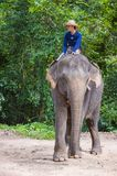 Elephant rider in Cambodia. SIEM REAP , CAMBODIA - OCT 15 : Cambodian man riding an Elephant at the Angkor Thom in Siem Reap Cambodia on October 15 2017 , Angkor Stock Images