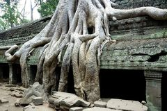 Siem Reap temple. One of the anciet ruins in Siem Reap Royalty Free Stock Image