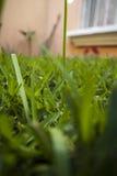 Siempre verde Fotografía de archivo