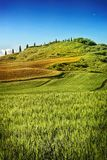 A Siena HIlls Royalty Free Stock Image