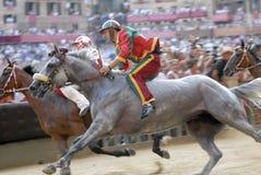Siena paliopaardenkoers Royalty-vrije Stock Afbeelding