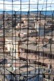 Siena till och med tråden Royaltyfria Bilder