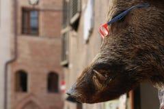 Siena, Toscana, Italia, la testa del verro con i vetri Fotografia Stock Libera da Diritti