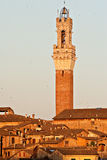 Siena Tower. At sunset with birds Royalty Free Stock Images