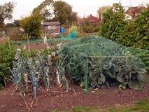 Siendo verde - crecimiento vegetal foto de archivo