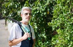 Siepe di arbusti della guarnizione del giardiniere con le forbici di giardinaggio Fotografie Stock