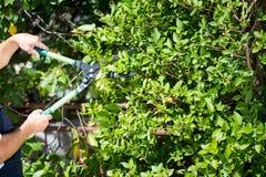 Siepe di arbusti della guarnizione del giardiniere con le forbici di giardinaggio Fotografie Stock Libere da Diritti